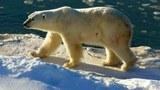 专栏 | 军事无禁区:与北极熊共舞