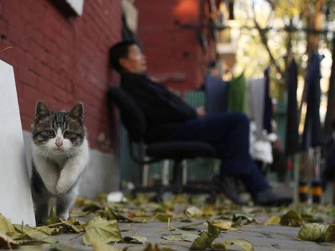 随着宠物经济崛起,猫成为新世代的宠儿,也衍生流浪猫问题。